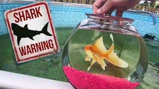 NEW PET EATEN by JAWS!!