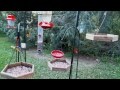 Blue Ridge Birds And Critters Cam