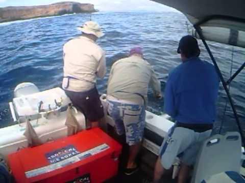 Spanish Mackerel Dirk Hartog Island Western Australia