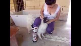 Aaa Malta/ A Petrified Pomeranian Hungry For Love