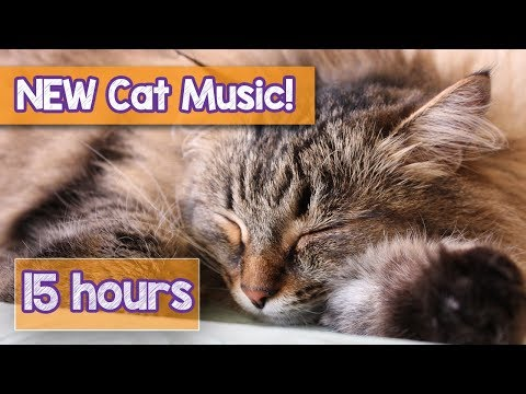 NEW How to Calm Your Cat Music! Music for Anxious Cats to Relax in 2018! Helped 4 Million Cats! 🐈💤