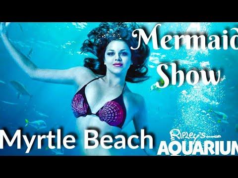Mermaid Show At Ripley S Aquarium Myrtle Beach Attractions