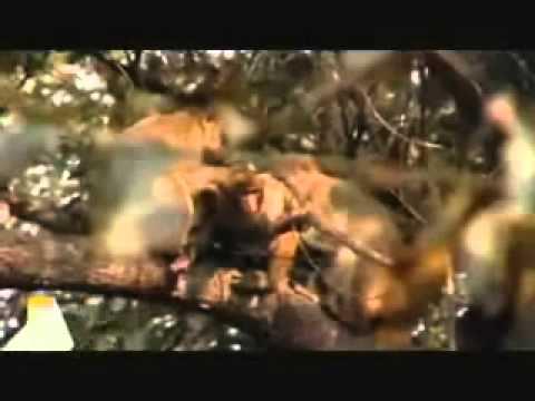 The Wildboyz Found Macaque!