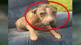 After This Abused Dog Was Abandoned By His Owners He Lived Alone On A Roadside Armchair For Days