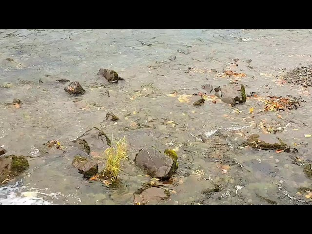 River Teviot from Teviot Crescent