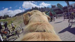 The Whistler Insider: A Dog