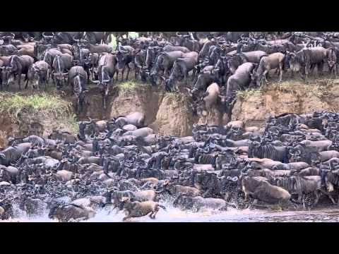 Impact of Large Animal Populations on African Rivers