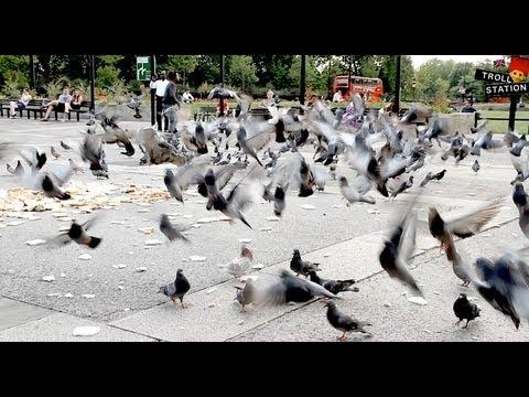 Trollstation Laxative Pigeon Prank