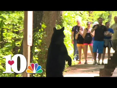 GPS tracking study redefines 'Bear Country' in East Tennessee