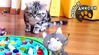 🐾😺  Котик Диксон. Сборник веселых  фрагментов. Смешное видео про кошек.)