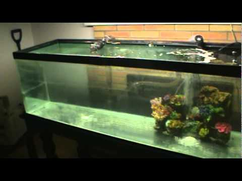 New fish only salt water aquarium youtube for Spring water for fish tank
