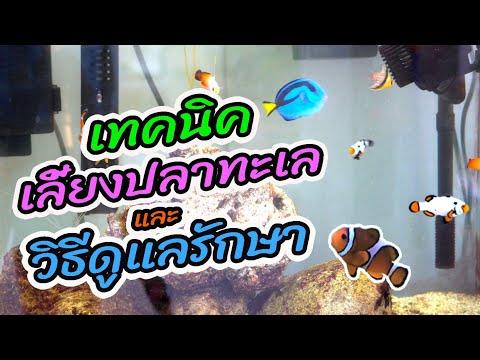 เทคนิคการเลี้ยงปลาทะเลและวิธีดูแลรักษา ตู้ปลาทะเลนาโนแบบง่าย : ตู้ทะเล EP.35