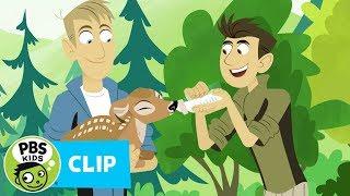 Wild Kratts: Deer Antlers thumbnail