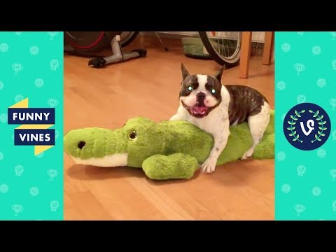 TRY NOT TO LAUGH - FUNNY ANIMALS Compilation   Cute Dogs & Cats   Funny Vines June 2018