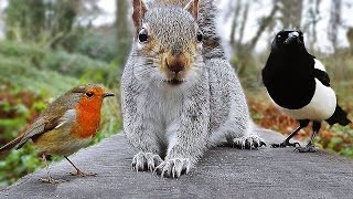 Videos for Cats to Watch - Birds and Squirrel Fun in December