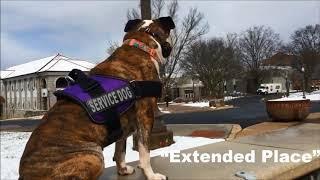 1yr Pitbull (Jemma) | Best Service Dog Training | Spokane & Coeur d'Alene