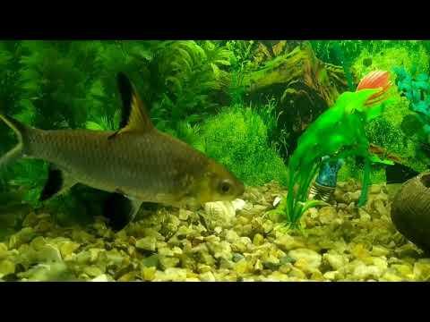 Aquarium \\ Silver Shark And Angel Fish 🐬🐬🐠🐠
