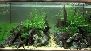 The Art Of The Planted Aquarium 2015 - Eheim (xl) Category, Part 9