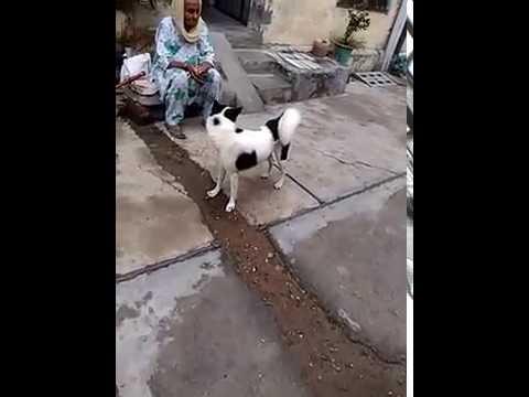 Funny dog 2016 videos utube