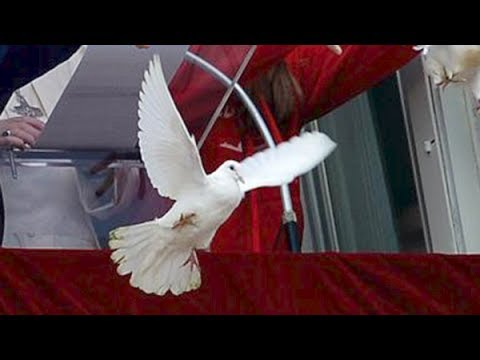 Peace Doves Released By Pope & That's When All Hell Broke Loose