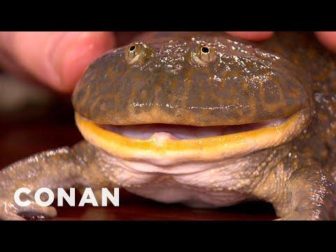 Mark Moffett's Satanic Frog & Delicious Mega-Larvae - CONAN On TBS