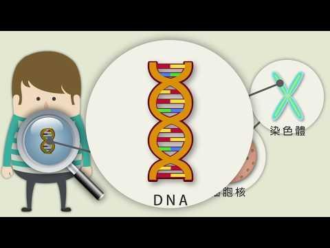 基因與生物