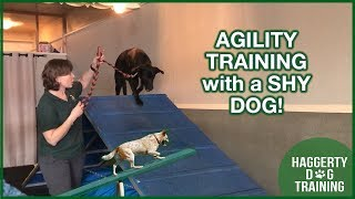 SHY DOG and AGILITY TRAINING!