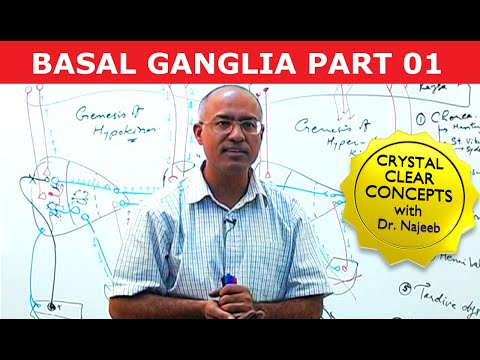 Basal Ganglia - Structure & Function - Neuroanatomy