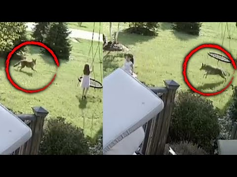 Sharon Green - 5 Year Old Girl Chased By Coyote!