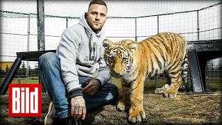 Rapper Kontra K baut Gehege für Tigerbaby