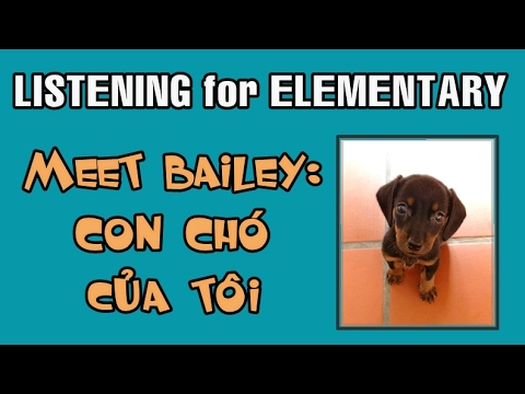 Learn Vietnamese with TVO   Listening for Elementary level: Bailey - Con chó cỦA tôi