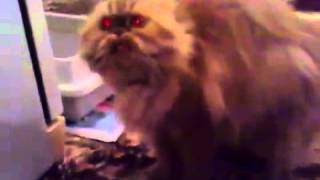 говарящая кошка с красными глазами