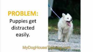 Dog House Training - Common Problems and How to Deal With them