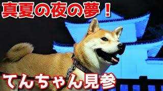 【京の柴犬】世界遺産二条城のライトアップに柴犬てんちゃん見参! 太郎の犬モノガタリ#258