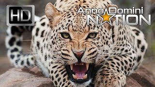 "Smooth Hip Hop Instrumental ""Animal"" – Anno Domini Beats"