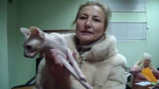 Дистанционное разведение породистых кошек FREE-BREEDER