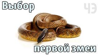 Змеи для начинающих террариумистов