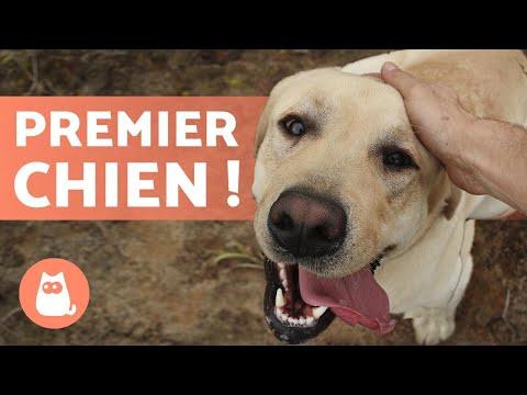 Laisse De Dressage Chien - 15 techniques à savoir - Les bases de l'éducation canine - Guide du chien