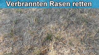 Rasen verbrannt und vertrocknet was tun - Erholt sich verbrannter Rasen wieder ?