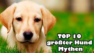 TOP 10 Größter Hund Mythen