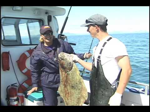 Cook Inlet Halibut Fishing With AFishunt Charters