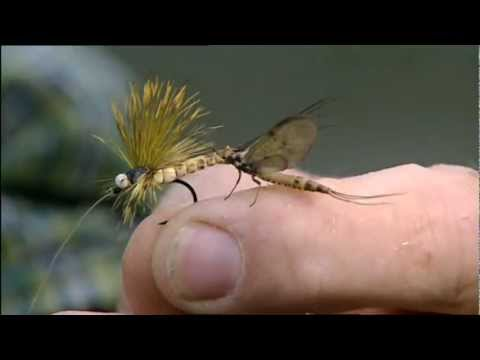 Oliver Edwards Mayfly Fishing