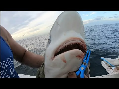Shark Surprise Fishing Miami Waters