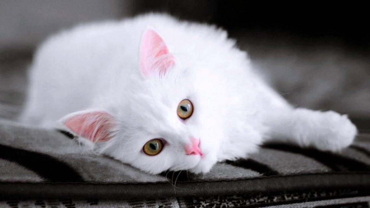 cat cats names feline quotations bili mano 1080 1920 desktop pc