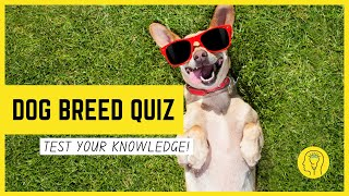 Dog Breed Quiz Questions And Answers | Test Your Knowledge Of Dog Breeds