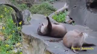 Most Funny Animals Compilation   Pets and Zoo Animals