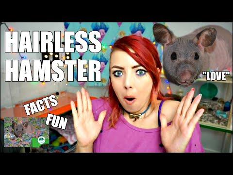 "MEET ""LOVE"" THE HAIRLESS HAMSTER! | California Hamster Association"