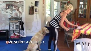 AKC TRICK DOG  ADVANCED