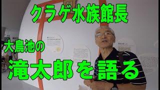 加茂水族館長が大鳥池の滝太郎を語る Legendary fish in Japan