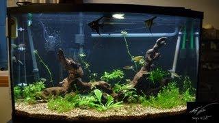 Petstore Employees 46 Gal. Bowfront Aquarium